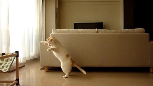 飛びかかろうとする猫