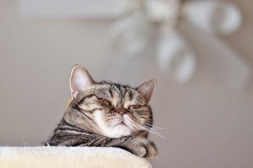 タワーの上から不快そうな顔で見下ろす猫