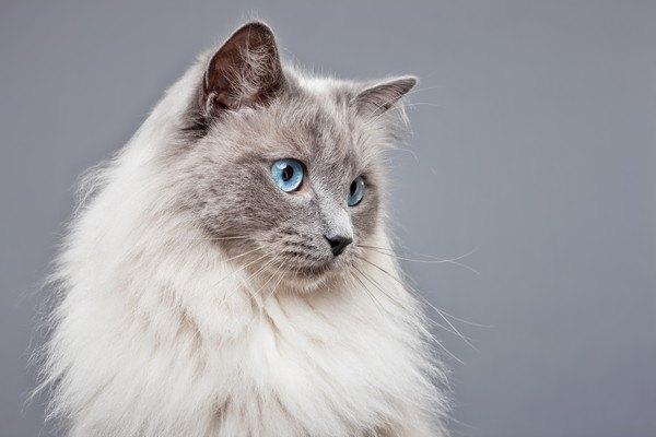 本物の猫の顔