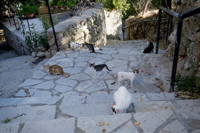 階段に沢山いる野良猫