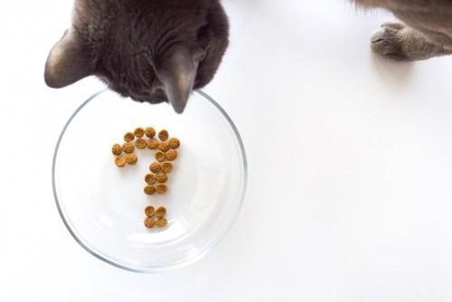 お皿を覗き込む猫
