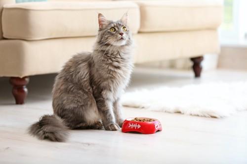 フードの入った食器の前に座る猫