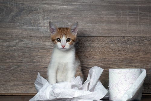 トイレットペーパーと仔猫