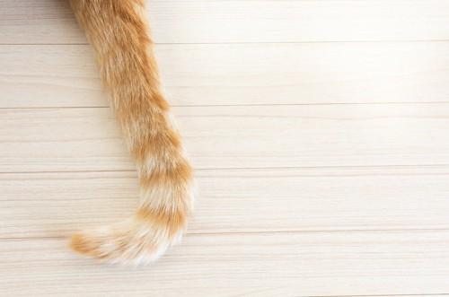 フローリングと猫の尻尾