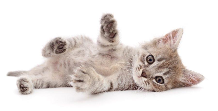 寝ころんでこちらを見つめる子猫