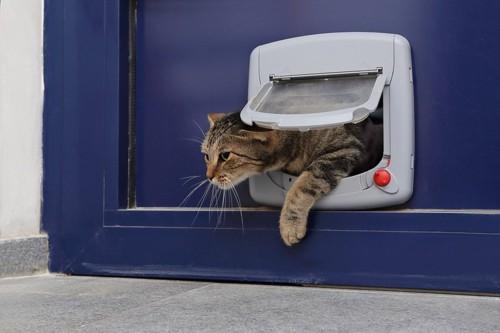 猫扉をくぐる猫
