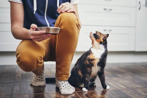 ご飯を待つ猫