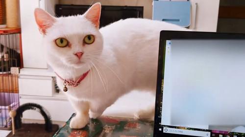 飼い主さんを見つめる猫