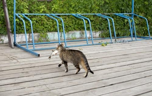 魚を盗むどら猫