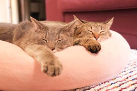 同じポーズで眠る兄妹猫