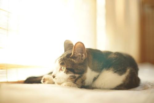 丸くなる猫の横顔