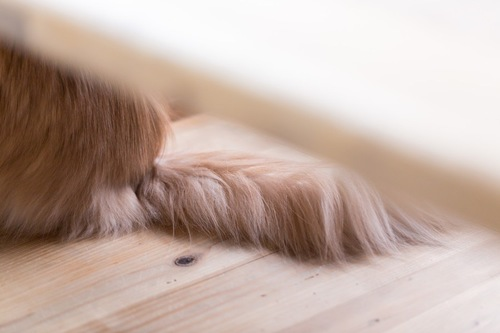 ふさふさの猫の尻尾