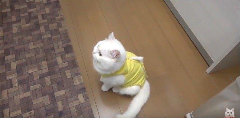 ウキウキの猫