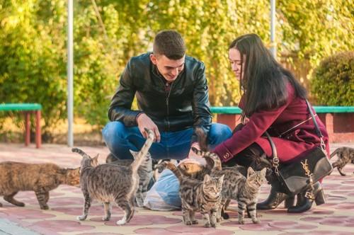 たくさんの猫と人