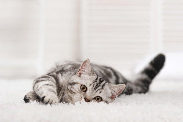 暖かいカーペットで寝転ぶ子猫
