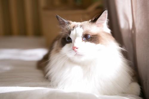 何かを気にする猫