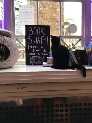 窓辺のこの黒猫ちゃんに惹かれて