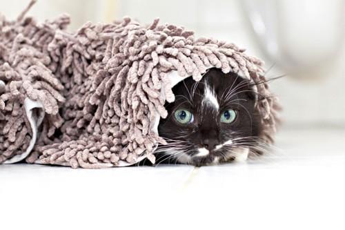 モップの下にいる猫