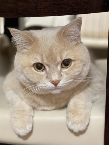 身を乗り出してこちらを見る猫