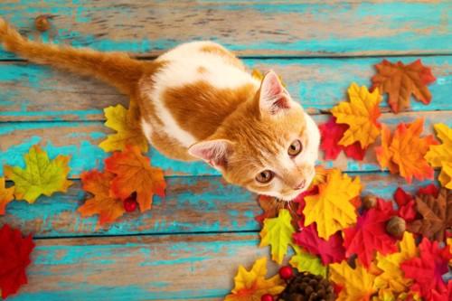 秋の落ち葉と猫