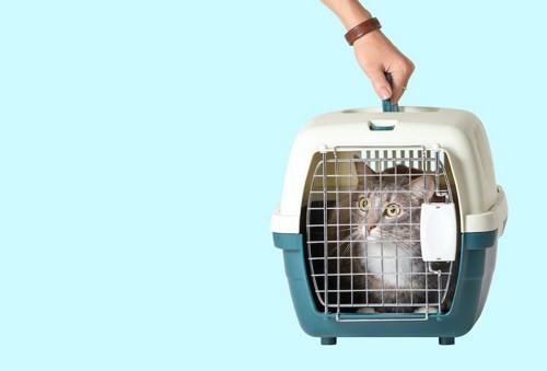 猫の入っているキャリーケースを持つ人の手