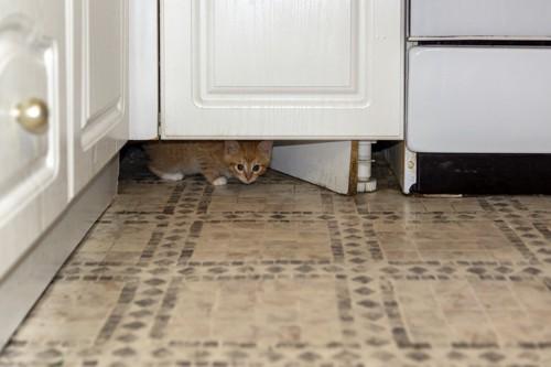 ドアの下からのぞく猫