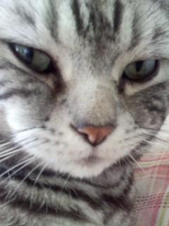 ふてくされた顔をした猫
