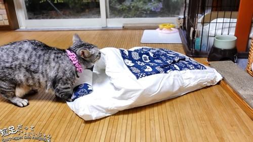 布団のにおいを嗅ぐ猫