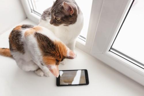 スマホと2匹の猫
