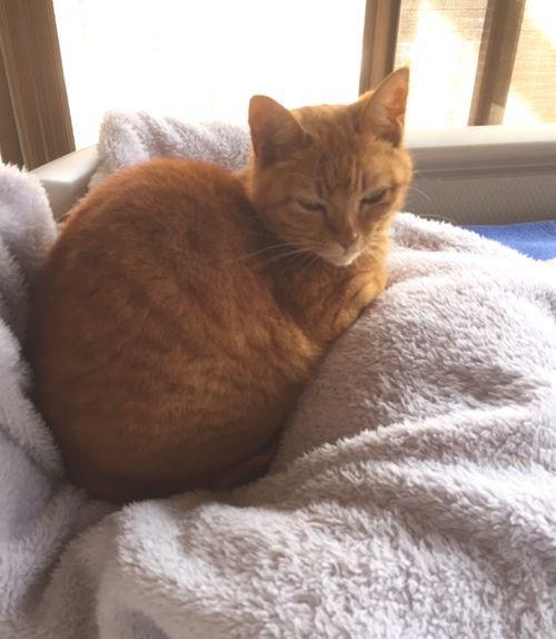 クッションの上に座っている猫