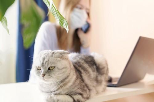 パソコンをする女性にお尻を向けて座る猫
