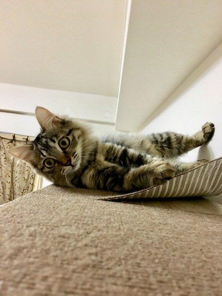 カーペットをめくる猫