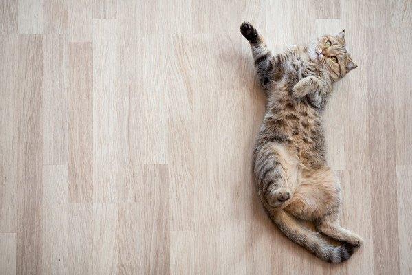 床の上で仰向けで寝る猫
