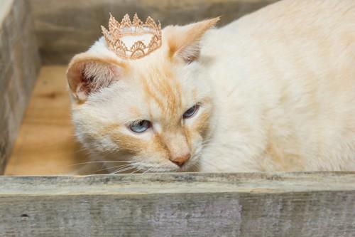 冠をつけた猫