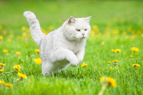 草むらを走る猫