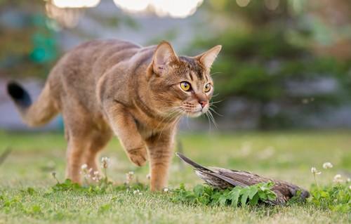 鳥をしとめた猫