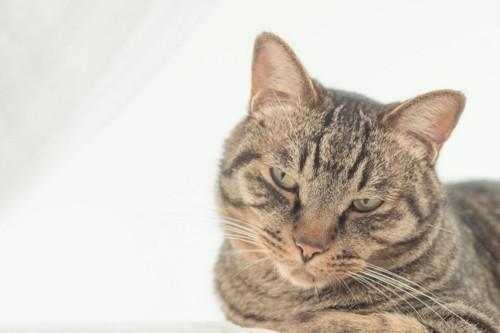 拗ねたように視線を逸らす猫