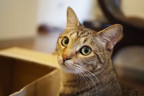 振り返ってこちらを見る猫