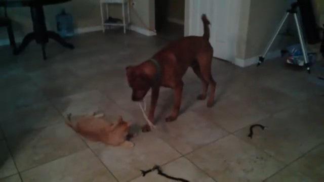 ロープを持ってくる犬