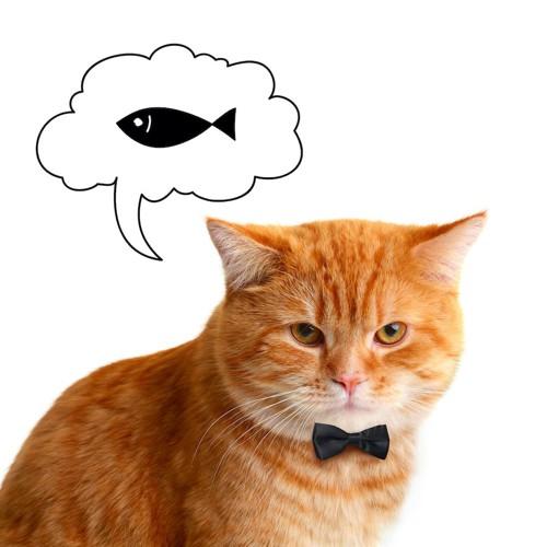 蝶ネクタイをした猫と吹き出しの魚のイラスト