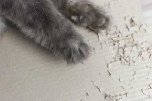爪とぎする猫の手アップ