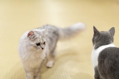 すれ違う2匹の猫