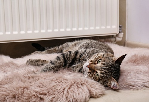 ヒーターの前で寝る猫