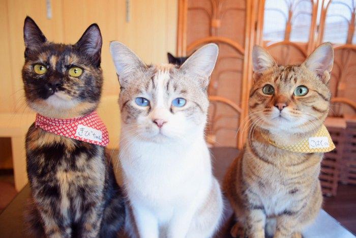 窓辺で外を見る猫たち