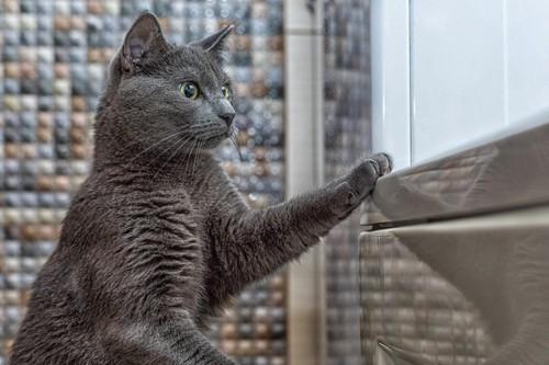 前足をついて立つ猫