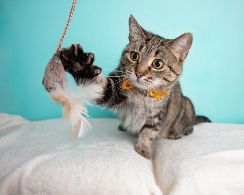 猫じゃらしに手を伸ばす猫