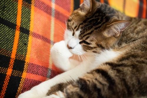 手を口に入れる猫