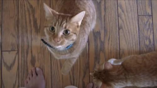 おやつから離れる猫