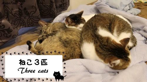 寝ている3匹の猫