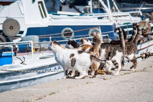 藍島の港で座っている猫